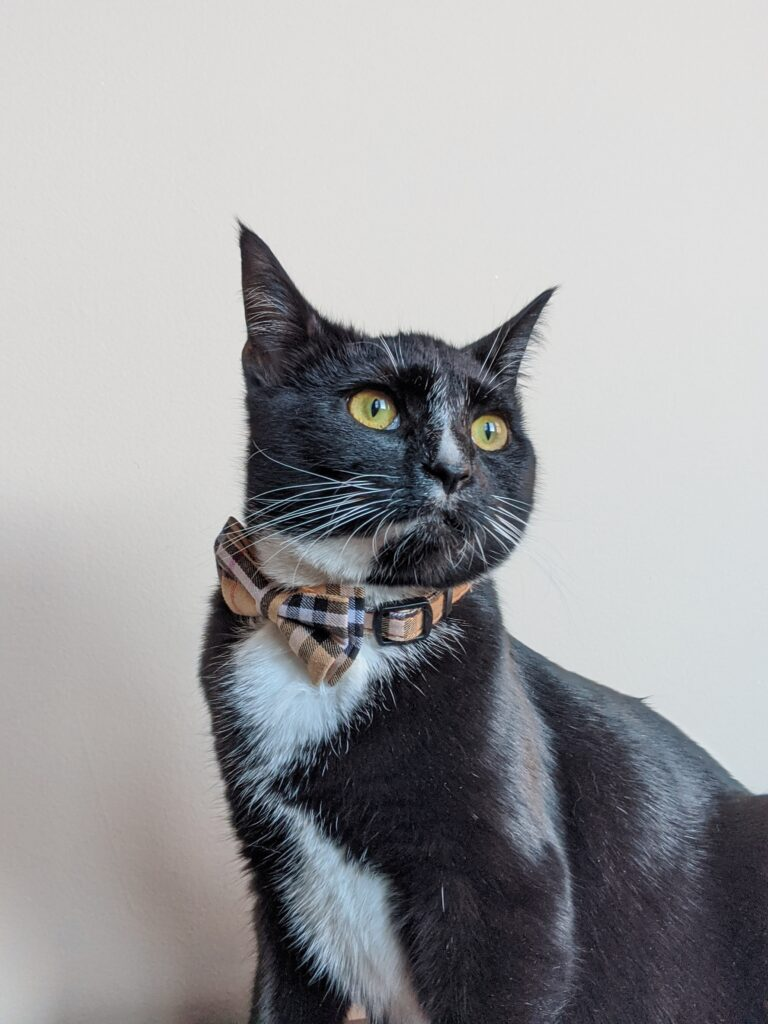 Burberry Breakaway Cat Collar with Cute Bow Tie + Bell - Kitty Essentials | Baubles & Bubbles Blog