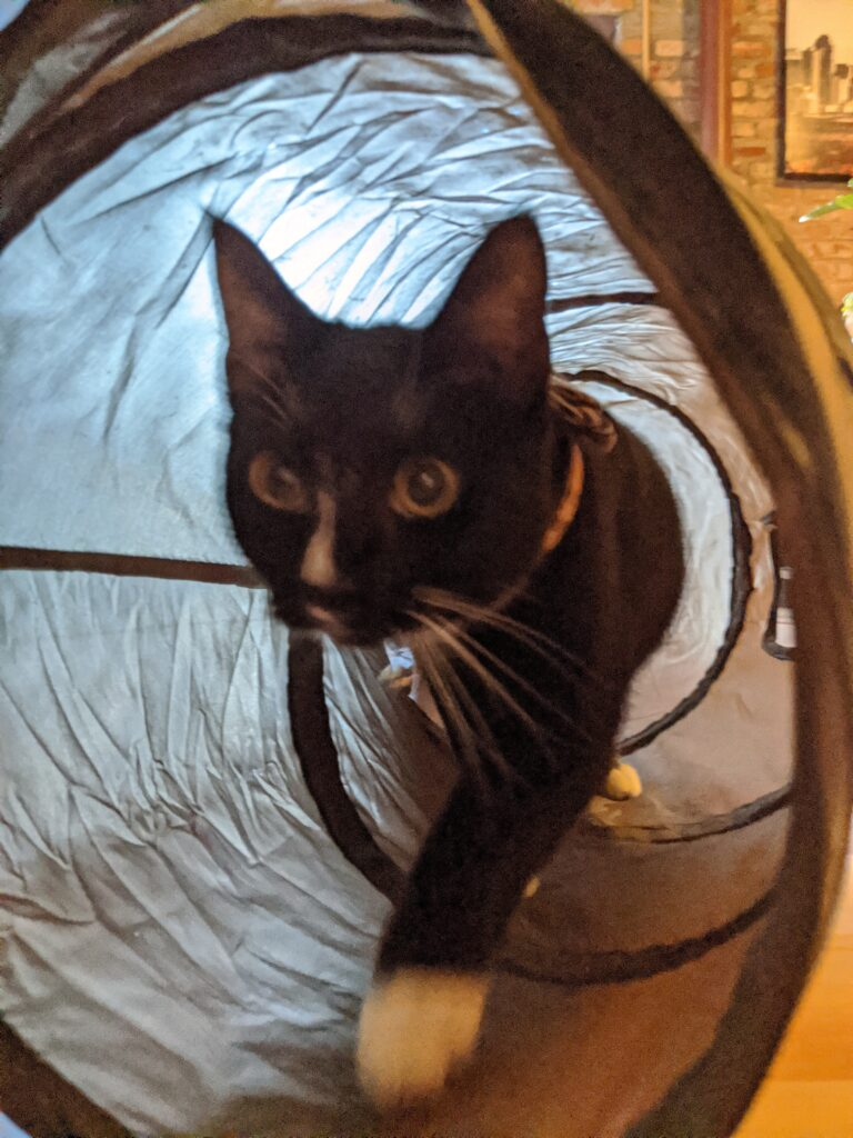 Collapsible Tunnel - Cat Essentials | Baubles & Bubbles Blog