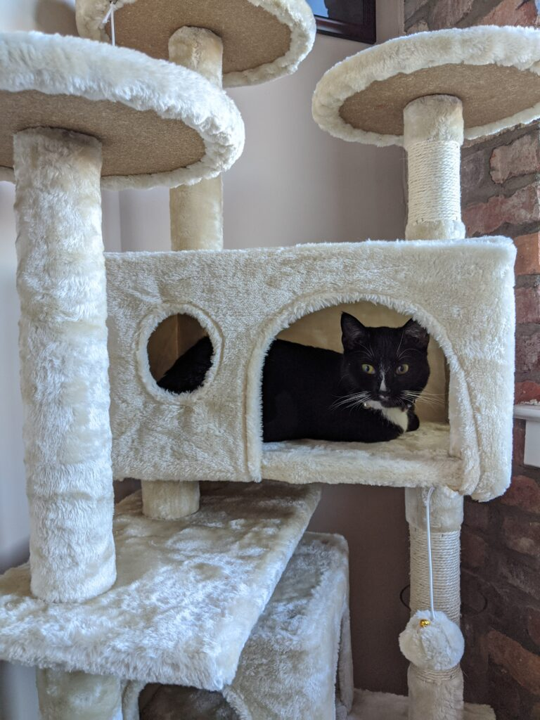 Scratching Post or Cat Condo - Kitty Essentials | Baubles + Bubbles Blog