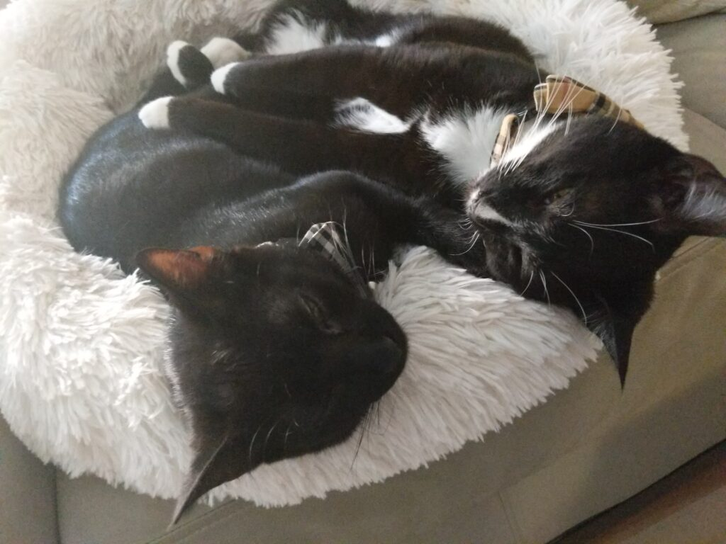 Cut Sleeping Black Cats - Kitty Essentials | Baubles & Bubbles Blog